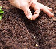 Jardinage – Les semences paysannes restent autorisées pour les amateurs